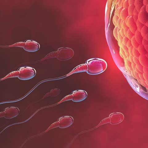 Can Foods Really Help To Improve Sperm Count?